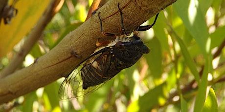 Bush Explorers - 'Autumn Almanac' - Bugs of the Bush - Noorumba Reserve tickets