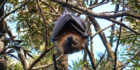 Bush Explorers - 'Autumn Almanac' - A Night with the Bats - Milton Park tickets