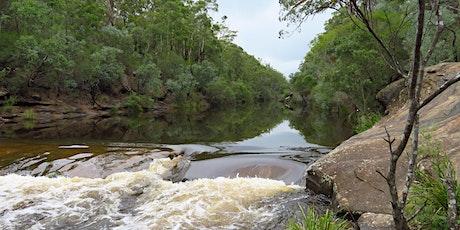 Bush Explorers - 'Autumn Almanac'  Nature Walk - Ingleburn Reserve tickets