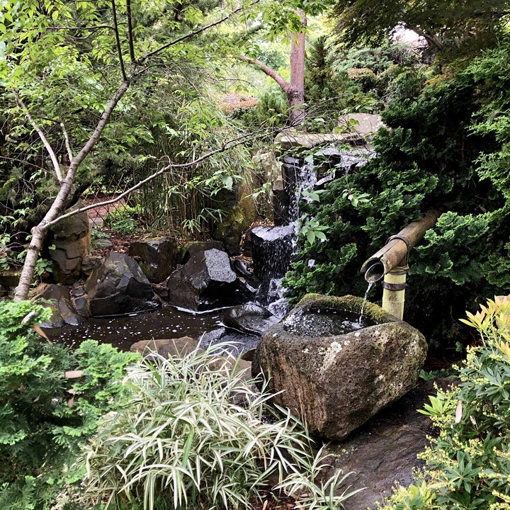 Forest Therapy Hobart - Royal Tasmanian Botanical Gardens CC image