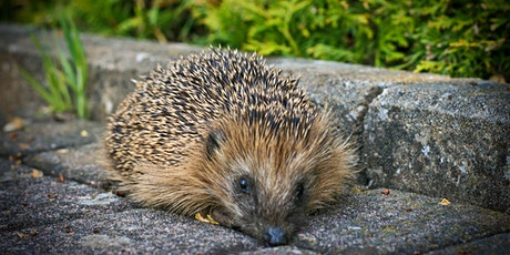 Space for Wildlife - Helping Hedgehogs tickets