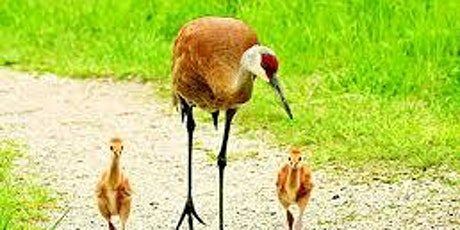 Florida Sandhill Crane Conservation tickets