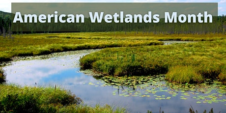 Lunchtime Water Series: American Wetlands Month (webinar) tickets