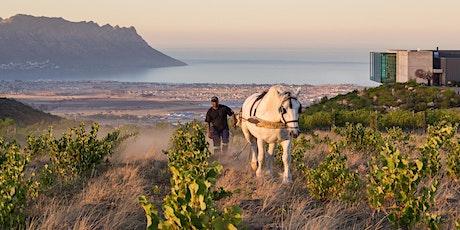 Virtual Stellenbosch Wine Tasting with Waterkloof Estate tickets