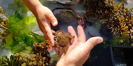 Marine Encounters at the NZ Marine Studies Centre tickets