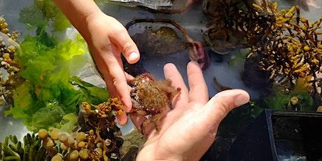 Marine Encounters at the NZ Marine Studies Centre tickets