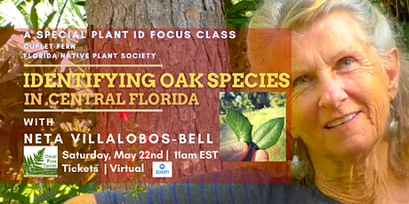 Identifying Oak Tree Species in Central Florida- A special plant ID class Tickets