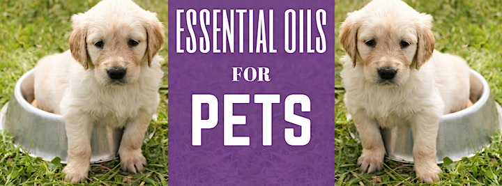 Essential Oils for Pets - image