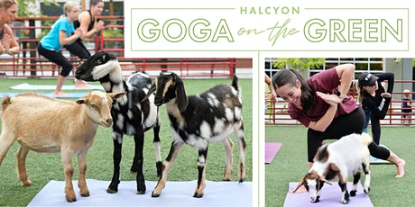 Farm Animal Yoga on the Green at Halcyon tickets
