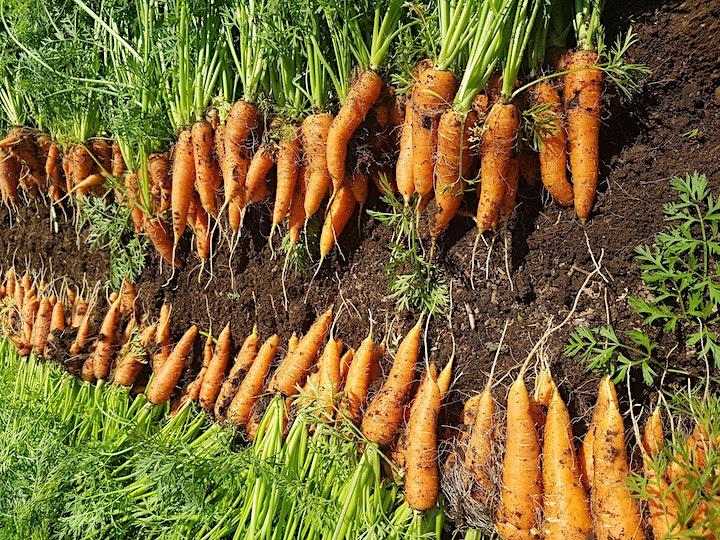 Organic, No-Till Gardening image