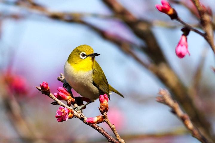 Aquarell Realistisch Vogel - Live ZOOM Onlinekurs - Kreativ zu Hause: Bild