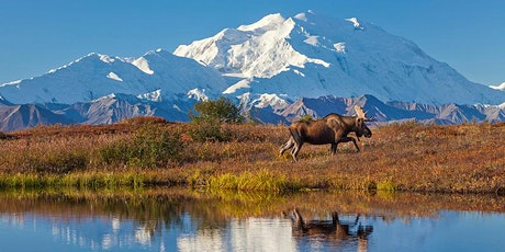 Denali and Wrangell-St.Elias NPs, with moderate hikes tickets