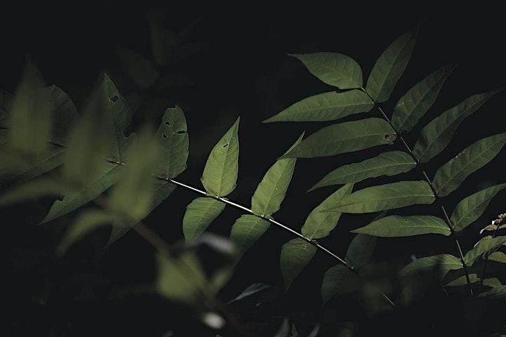 Acryl Abstrakt-Botanisch - Live ZOOM Onlinekurs - Kreativ zu Hause: Bild