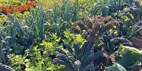 Free Thursday Q&A: Grow Your Own Health - Biodynamic Gardening tickets
