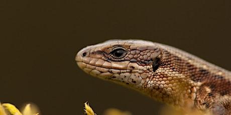 Reptiles WFfW Webinar tickets