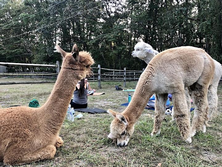 Yoga with Alpacas image