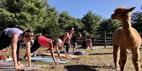 Yoga with Alpacas tickets