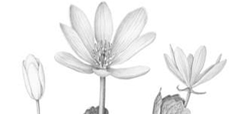 4 Week Botanical Illustration Class (ONLINE) tickets