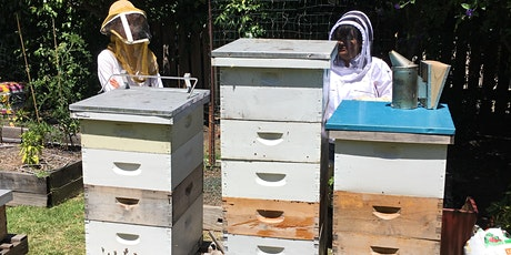 Introduction to Backyard Beekeeping tickets