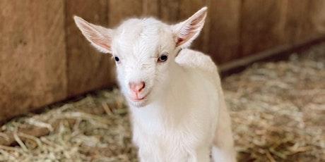 Goat Yoga Nashville- Spring Has Sprung tickets
