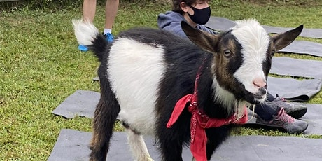 Goat Yoga Nashville- Marvelous May tickets