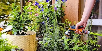 Water smart gardening in summer