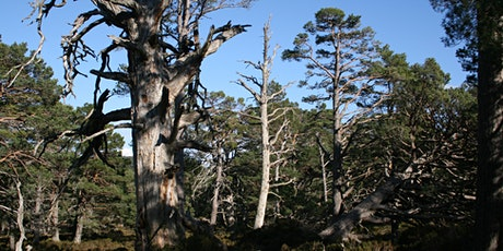 Abernethy Forest: its history and ecology tickets