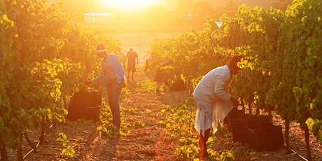 Fundraising online tasting in support of South African wine - second date tickets