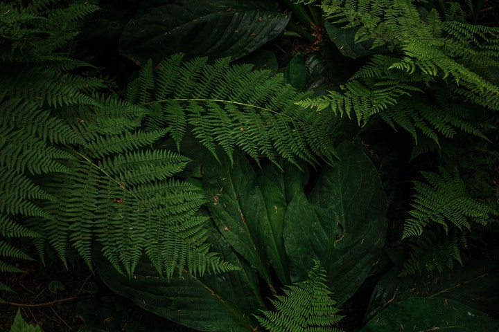 Nature Hour: Made in the Shade: Gardening with shade-loving natives image