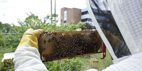 Urban Beekeeping: Stern Lessons From a Gracious Friend tickets