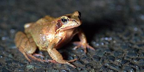 Sauvons les amphibiens de Bellefontaine! billets
