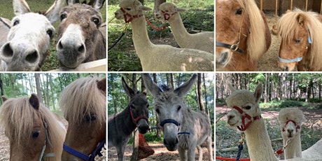 Easter Fun Private Walk & Picnic- Donkeys, Mini Shetland Ponies or Alpacas tickets