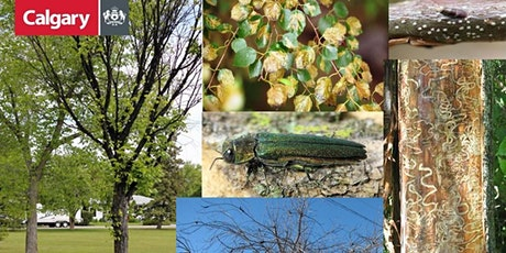 YYC Trees: Pests & Disease tickets