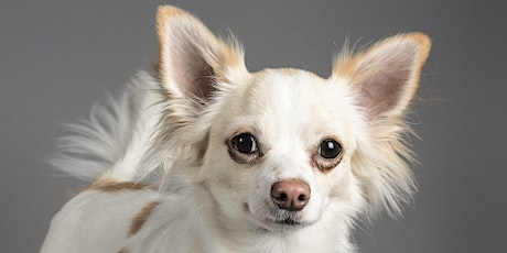 Pet Portrait Event (Mount Maunganui) - A day to remember for you & your pet tickets