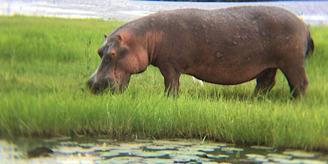 The Healing Hippo Tribal Gathering - Spring Equinox - reconnect with nature Tickets