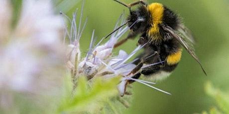 Pollinator Gardens- With Rob Danforth tickets