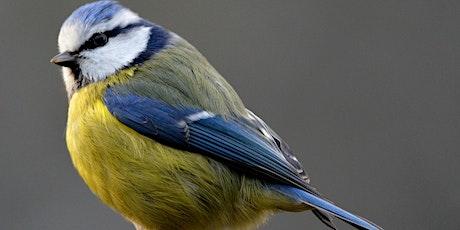 Fresh Look @ Birds (Remote Edition) tickets
