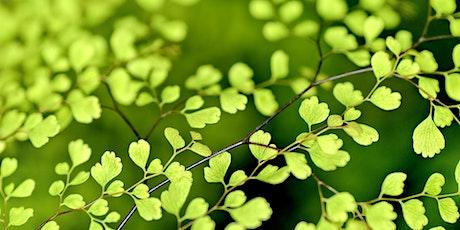 Plant genomics: chloroplast genome assembly using Galaxy Australia tickets