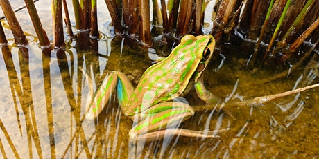 Habitat Management for the Green and Golden Bell Frog tickets