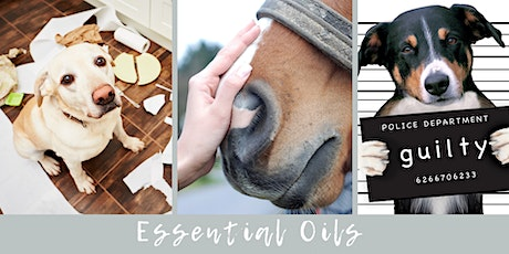 Essential Oils for Dogs & Horses tickets