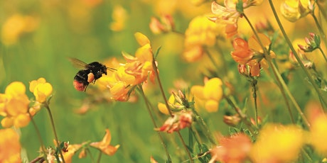 Get Cumbria Buzzing! – Pollinator identification in the field (Morning) tickets