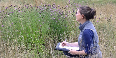 Get Cumbria Buzzing! – Pollinator recording and transect training morning tickets