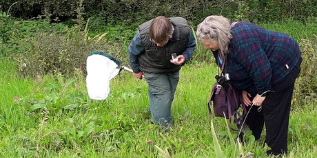 Get Cumbria Buzzing! – Pollinator recording and transect training afternoon tickets