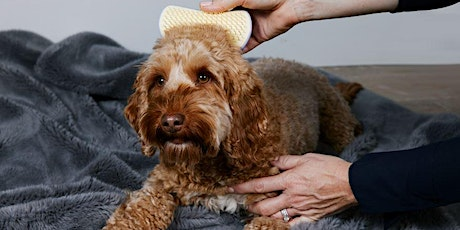 DOG GROOMING WITH PET TEEZER - FREE tickets