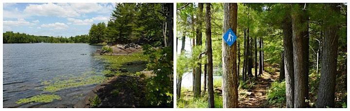 Frontenac Forest Bathing Thursdays image