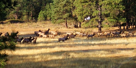 PAWA Paints Flying Horseshoe Ranch 2021 tickets