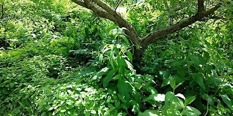 Conception d'une Forêt Nourricière (en ligne)- 25 avril et 2 mai 2021 billets