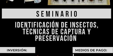 Seminario: Identificación de Insectos, Técnicas de Captura y Preservación entradas