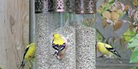 Watching and Caring for Birds in your Garden with Birdwatch  Ireland tickets