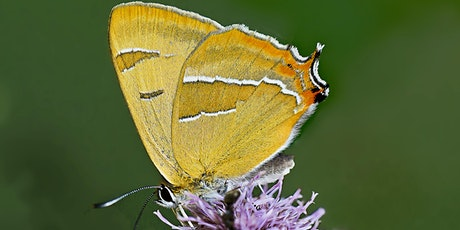 Identification of late summer butterflies tickets